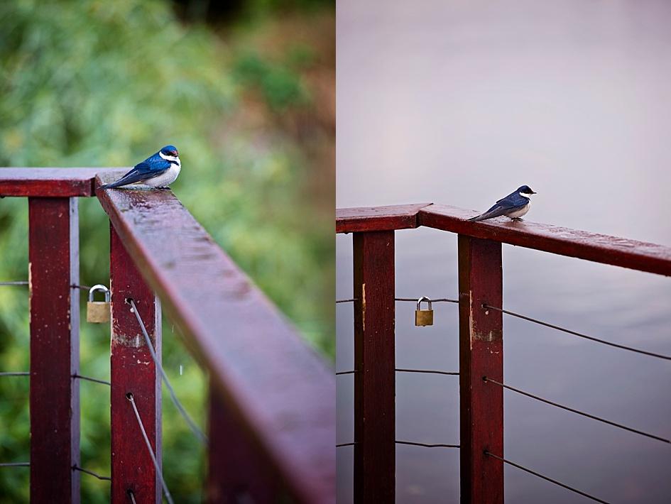 nature-birdlife-eshoot.jpg
